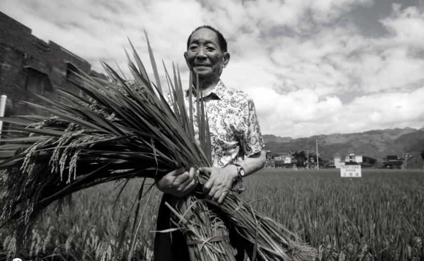 杂交水稻之父袁隆平去世